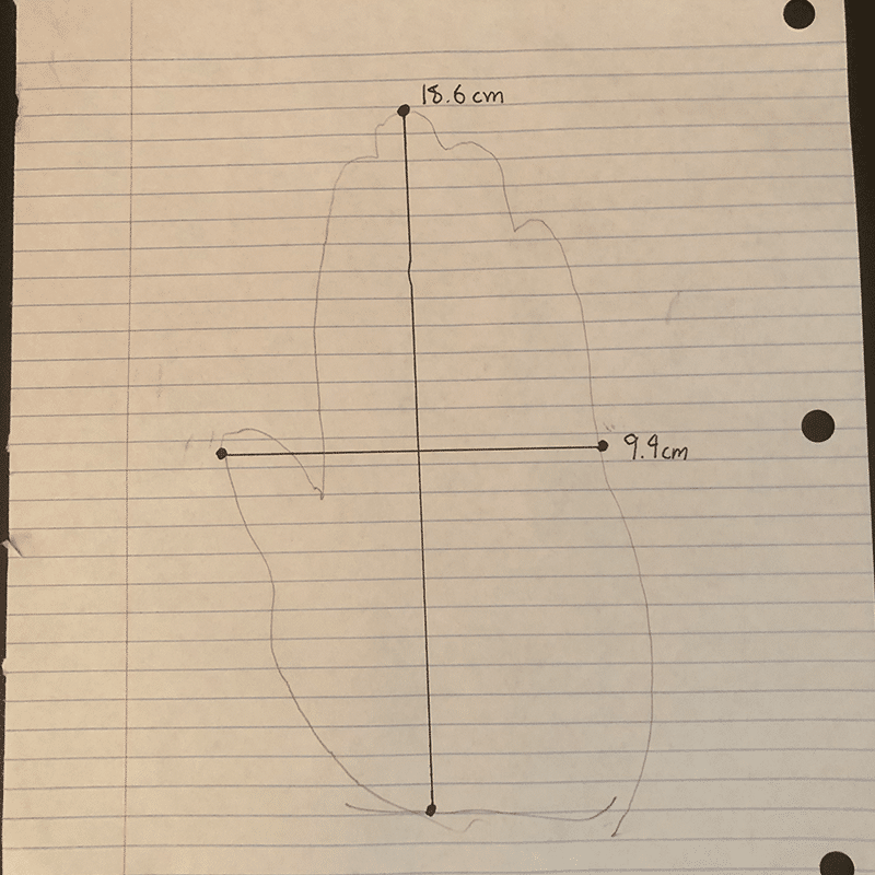 Traced and measured hand example